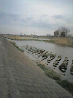 image/acomari-2006-03-18T18:37:49-1.jpg